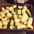 Box filled with corn on the cob