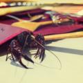 Crawfish walks on table top outdoors